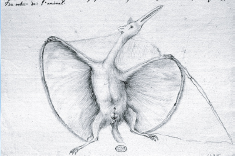 First pterosar reconstruction