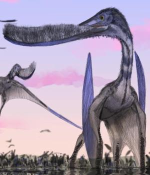 Pterosaur Net Important Species